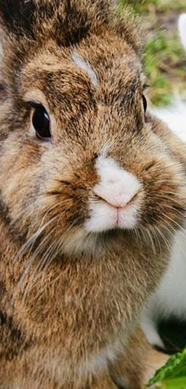 Kaninchen & Nager
